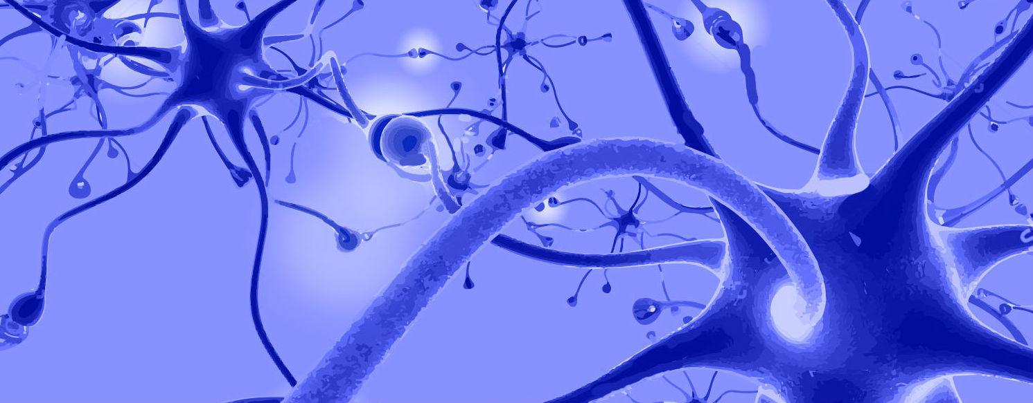 Oferta Académica Neurociencias